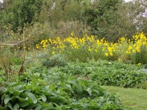 permaculture design and landscape garden services